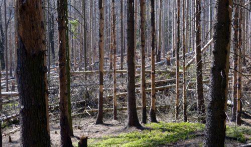 Artikelbild zu Artikel Wegsperrungen und Einschränkungen im Nationalpark